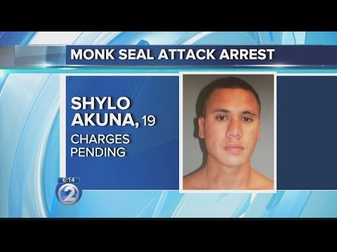 Man arrested in connection to monk seal attack on Kauai