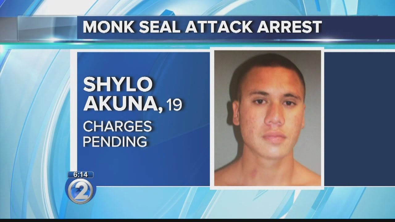 Wildlife officials to move monk seal pup from Waikiki to remote, undisclosed ...