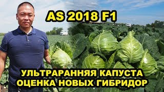 видео: Выращивание овощей. Капуста AS 2018 F1. Ультраранняя капуста