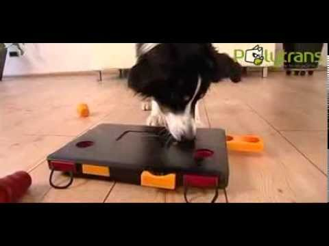 jeux educatifs dog activity pour chien chez polytrans youtube. Black Bedroom Furniture Sets. Home Design Ideas