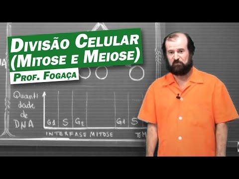 Biologia - Divisão Celular (Mitose e Meiose)