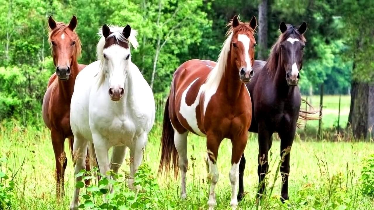 Интересные факты - Лошади - YouTube