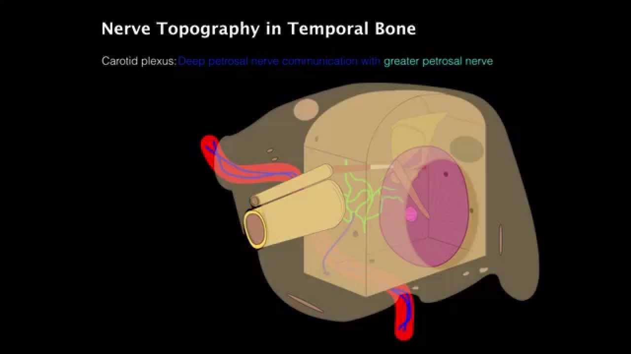 Cranial Nerve Pathways Through The Temporal Bone Youtube