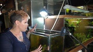 EXPOSED- my oldest and ugliest aquarium