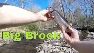 Trout Fishing in North Carolina