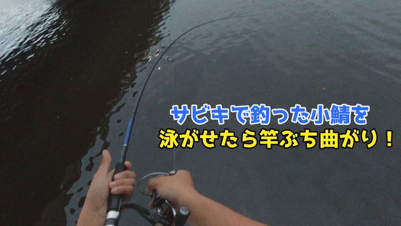 サビキで釣った小鯖を泳がせたら竿ぶち曲がり!
