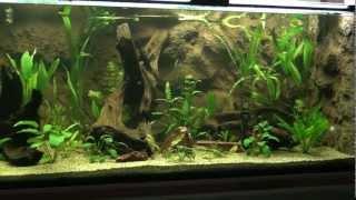 Big Aquarium 2400 l - Scalare Pterophyllum