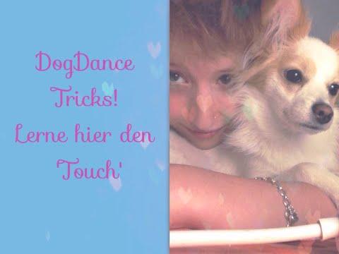 Der erste Trick beim DogDancing - Lerne hier den Touch!