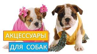 Акцессуары для собак. Приобретайте  качественные  акцессуары  для  собак.
