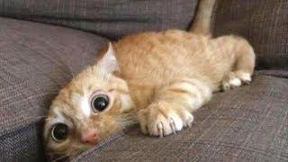 面白い猫のトップ10動画 -  Funny Cats 2017