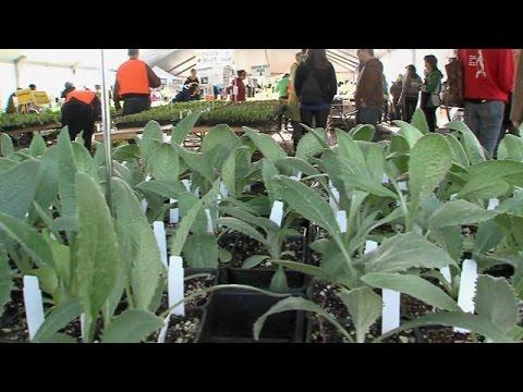 CityStream: Edible Plants