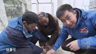 [远方的家]行走青山绿水间 鄱阳湖畔护鸟人| CCTV中文国际