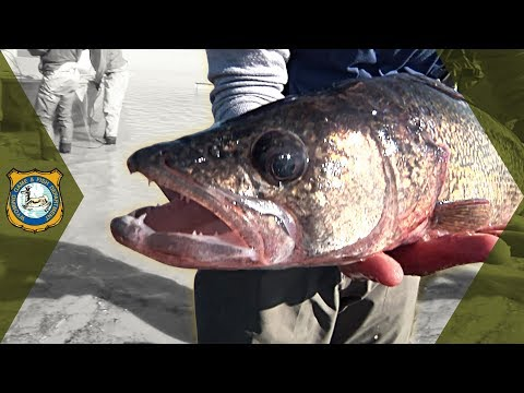 Wheatland Reservoir #3 - Fish Survey