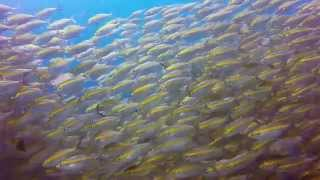 Diving around Koh Samui Koh Tao & Sail Rock, Thailand (HD 1080p)(Song: Tez Cadey - Seve., 2015-08-17T20:47:51.000Z)
