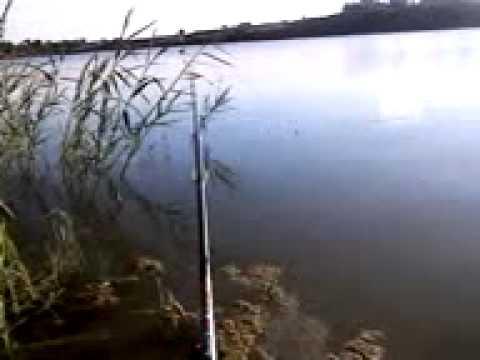 платная рыбалка в вашутино тверская область