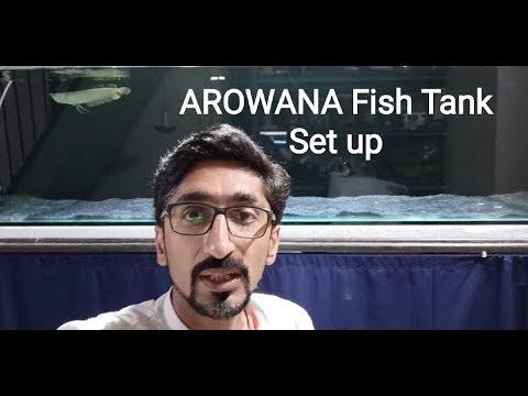 Arowana Fish Tank Setup