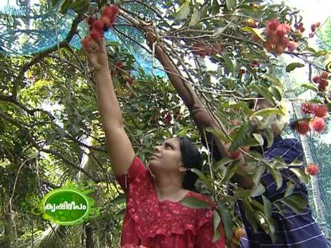 strawberry cultivation in india pdf