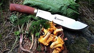 Waldläufer Nahrung