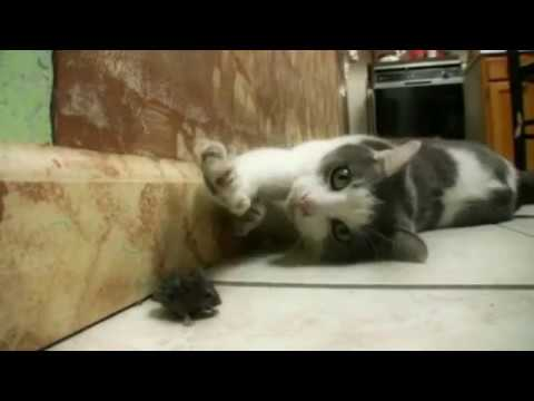 Fighting cat and mouse playing | Funny CAT & mouse compilation ~cat catching mouse