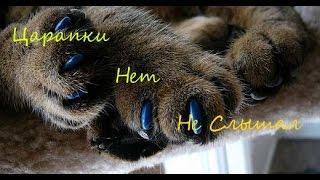 Посылка из Китая с Aliexpress/Антицарапки для кошек и котов