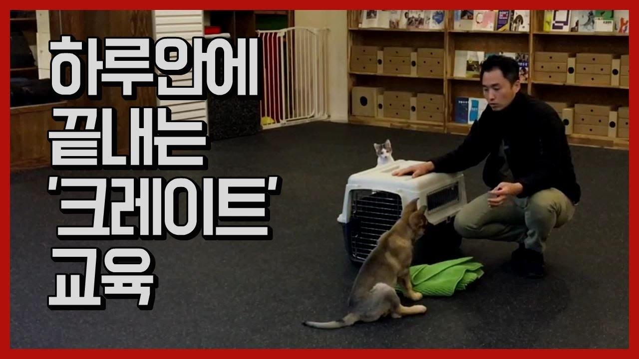 [반려견교육] 하루안에 끝내는 크레이트 적응교육 - teach your dog 'crate' training