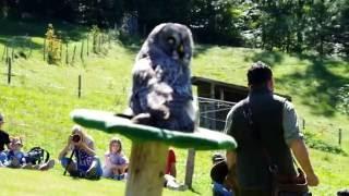 スイス Atzmaennig-Tag Greifogel-Flugshow(猛禽のフライトショー) カ...