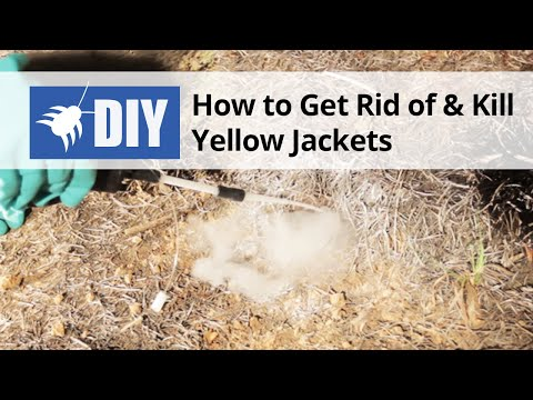 How To Get Rid Of Kill Yellow Jackets Nest Removal