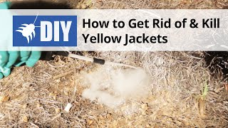 How to Get Rid of Yellow Jackets & Wasps