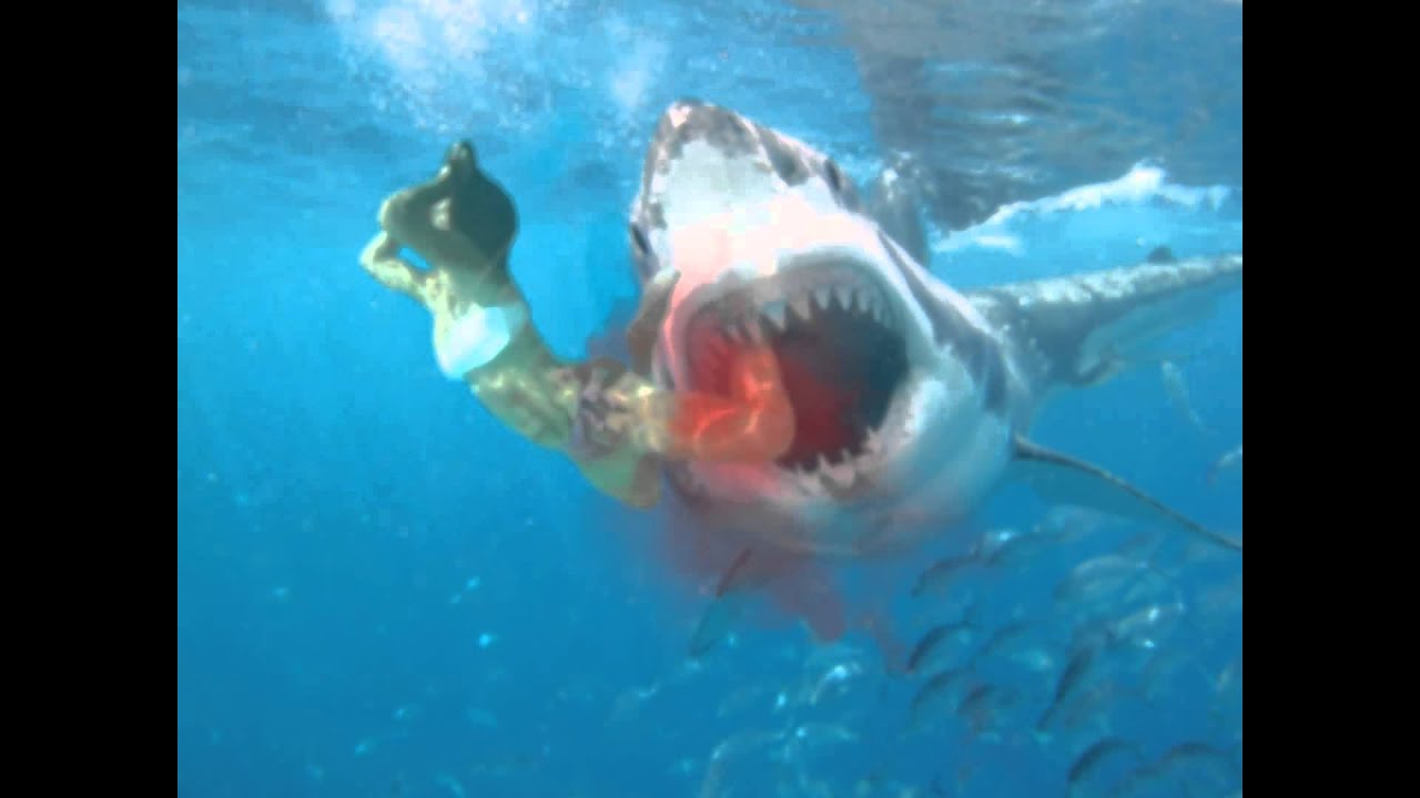 Shark Attack on Woman 2013 - YouTube