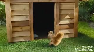 Клип к фильму Кошки против собак 2