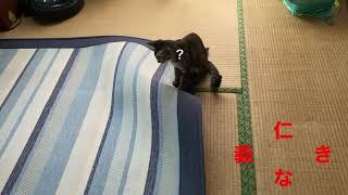 親子ねこの仁義なき戦い。#japan#kagoshima#cat#仁義なき戦い#local news #travel#catpunch