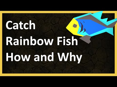 Fishing Rainbow Fish Guide - How And Why - OSRS