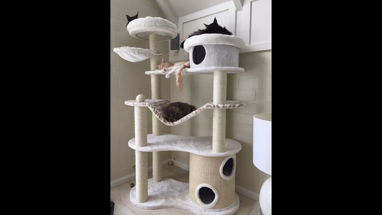 Como montar o arranhador trono de ferro youtube - Fotos de casas para gatos ...