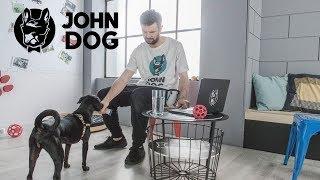 Jak oswoić psa z dźwiękiem domofonu - John Dog