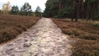 Im Wald und auf der Heide 09