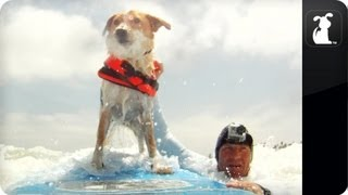 My Incredible Dog - Moo The Surf Dog