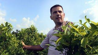 Colombia: Cursed by coca in Catatumbo
