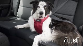 Clickit Sport dog safety harness by Sleepypod - Instructional Video