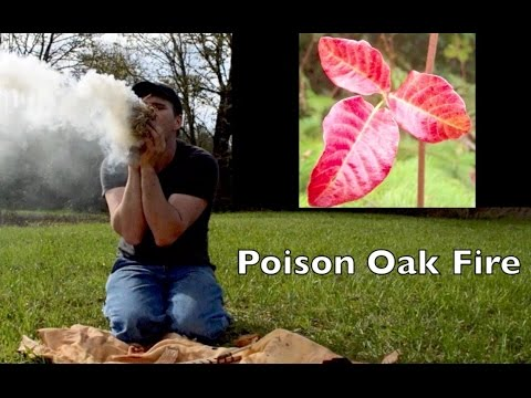 Poison Oak Hand Drill Friction Fire. Remembering Ishi 100 years after his death.