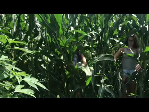 pour-some-sugar-on-me-official-music-video