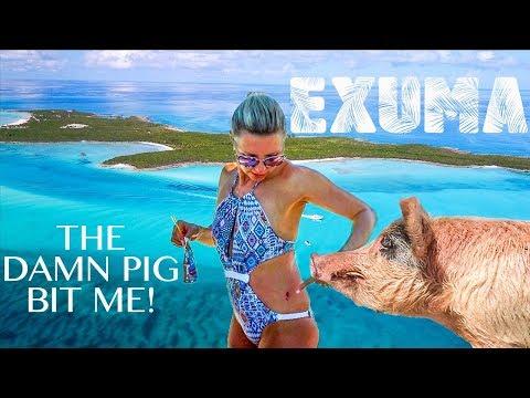 SWIMMING PIGS CAN BITE (Exuma Bahamas)