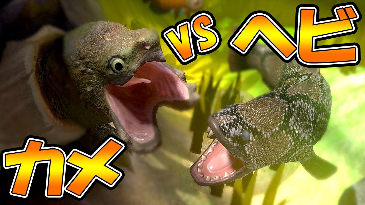 Vs feed for Feed and grow fish online