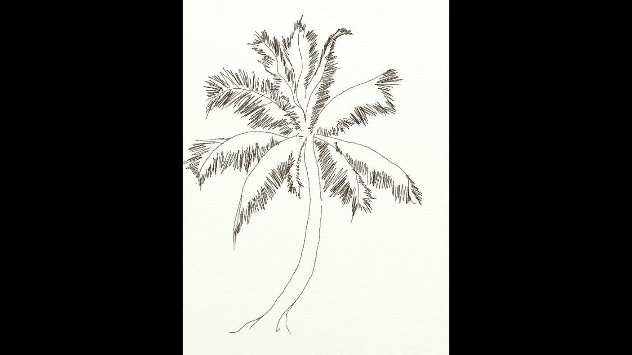 How to draw a coconut tree in easy steps pencil sheding