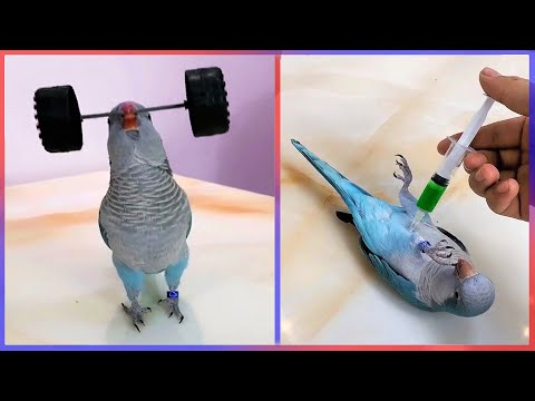 A Parrot That Lifts Weights