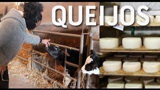 FOMOS COMPRAR  INGREDIENTES PARA PRODUZIR QUEIJOS FRESCOS | Azienda Agricola ZIPO