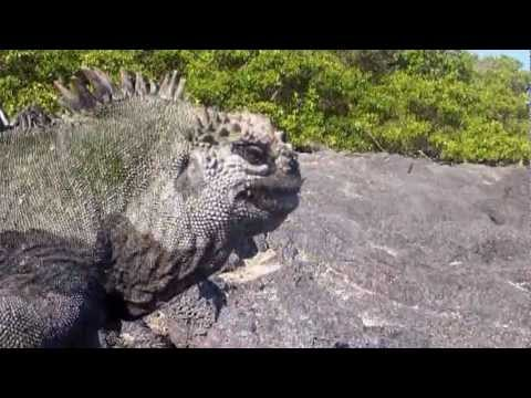 """Expedition New England- Episode 89 """"Going Extinct"""""""