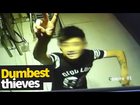 Dumb Thieves Compilation