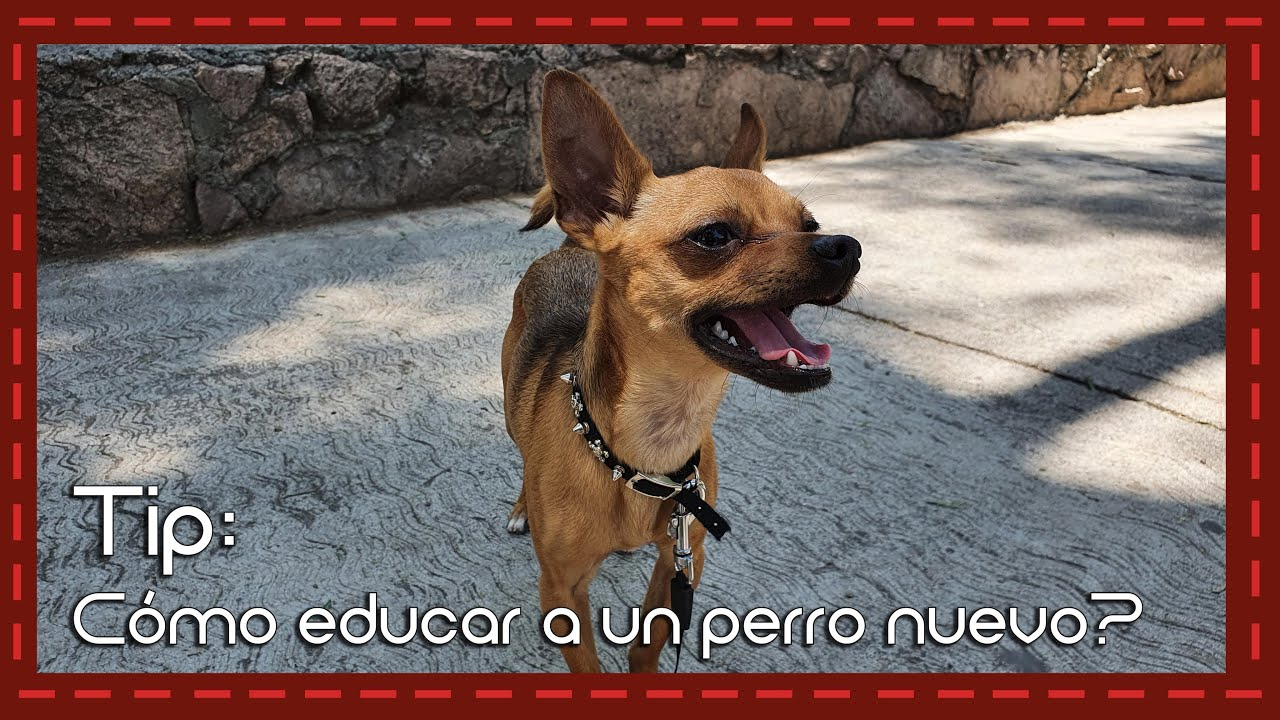Tip: Cómo educar a un perro nuevo? que te obedezca