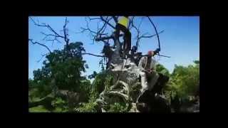 Stronger. Fantan Mojah (Maximum Sound) 2006