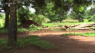 360° Geo Reportage Uganda - Der Weg zum Fahrradtaxi